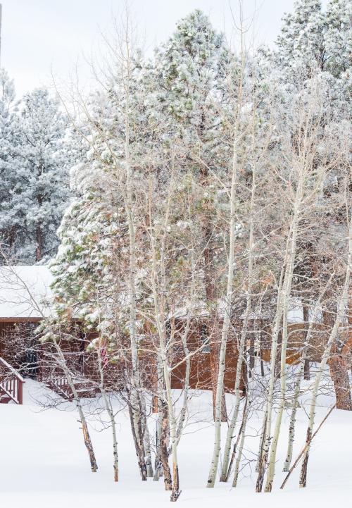 Mar 2021 snow web