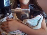 3_little_kittens_1